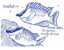 Рыба-заяц