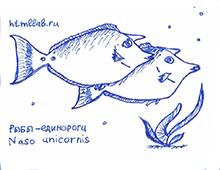 Рыбы-единороги
