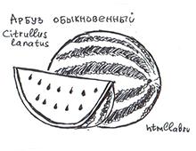Ягоды: арбуз