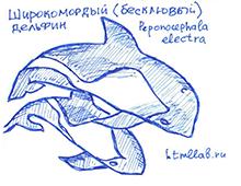 Бесклювые дельфины