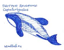 Пёстрые дельфины